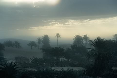 http://www.transafrika.org/media/Mauretanien/Oase-Sahara.jpg