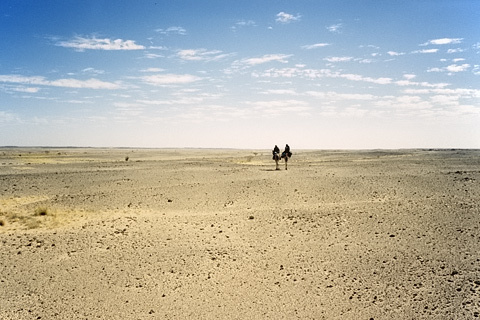 http://www.transafrika.org/media/Niger/kamele-reiter-wueste.jpg
