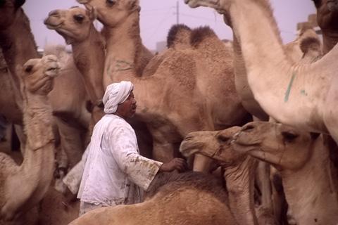 http://www.transafrika.org/media/aegypten/kamelmarkt.jpg