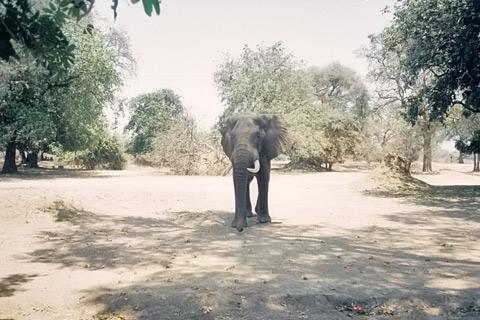 Simbabwe Reisen Safaris
