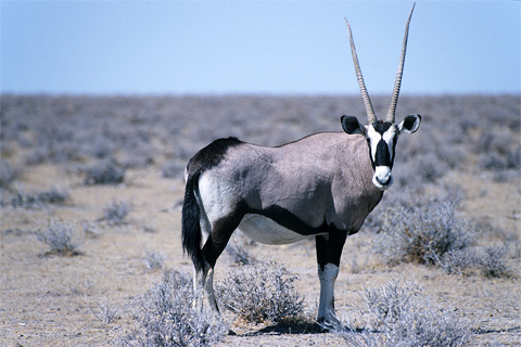Südafrika Safaris Reise Urlaub