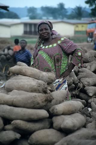 http://www.transafrika.org/media/ghana/cassava-ghana-westafrika.jpg