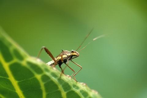 http://www.transafrika.org/media/ghana/insekt-ghana-regenwald.jpg