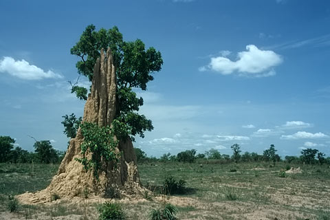 http://www.transafrika.org/media/ghana/termitenhuegel-savanne.jpg