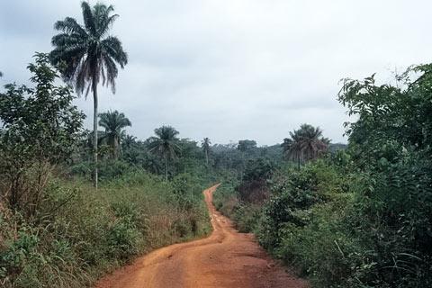 http://www.transafrika.org/media/guinea/piste-regenwald.jpg