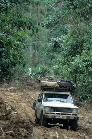 http://www.transafrika.org/media/guinea/regenwald-piste.jpg