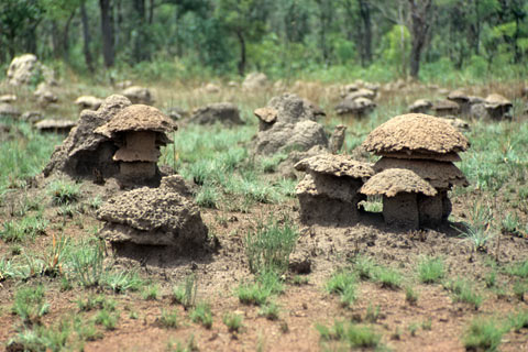 http://www.transafrika.org/media/guinea/termiten-savanne.jpg