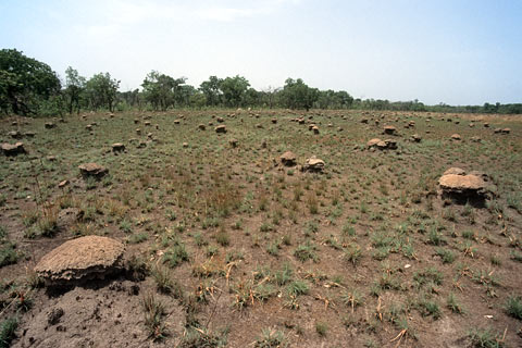 http://www.transafrika.org/media/guinea/termitenhuegel-savanne.jpg