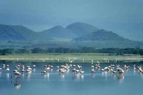 http://www.transafrika.org/media/kenia/flamingos-kenia-afrika.jpg
