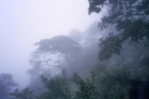 Afrika Malawi Urwald Bilder