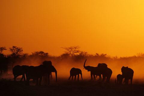 Afrika Elefanten Namibia Bilder